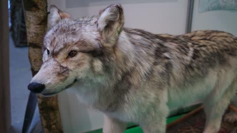 Stuffed-Wolf