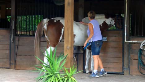 Woman-Brushing-a-Horse