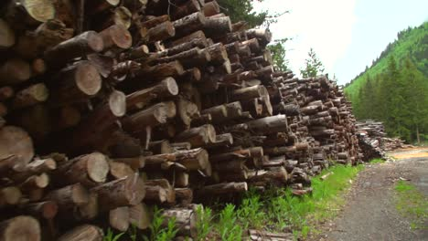 Walking-Along-Woodpile-Handheld-Shot