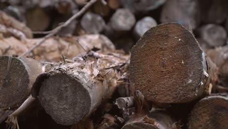 Woodpile-Close-Shot-Handheld