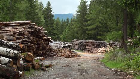 Woodpile-Wide-Shot