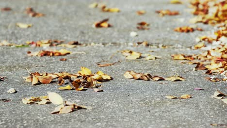 Autumn-Leaves-5