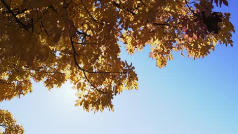 Autumn-Leaves-6