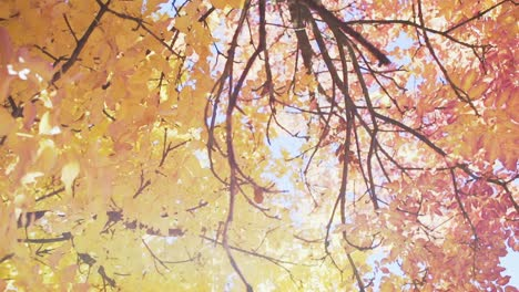 Autumn-Leaves-7
