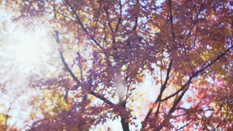 Autumn-Leaves-in-Slow-Motion-1