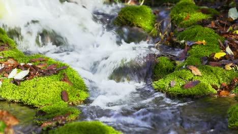 Woodland-Creek-3