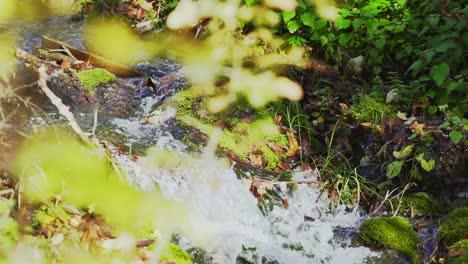 Creek-in-Slow-Motion-2