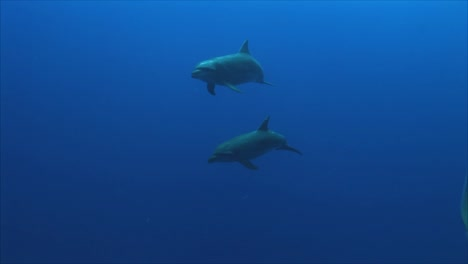 Dolphins-Underwater