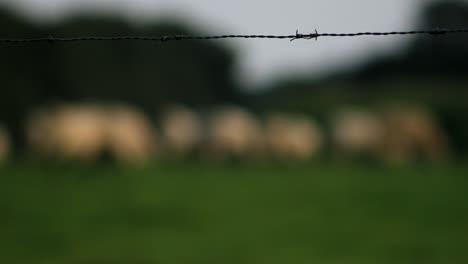 Barbed-Fence-Enclosure