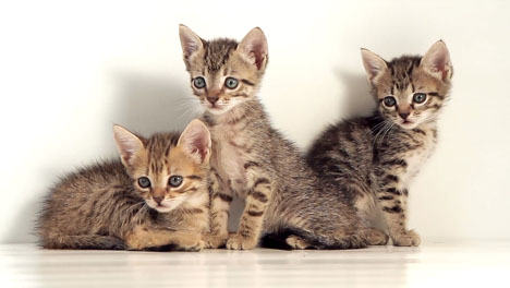 Kittens-Against-White-Background-