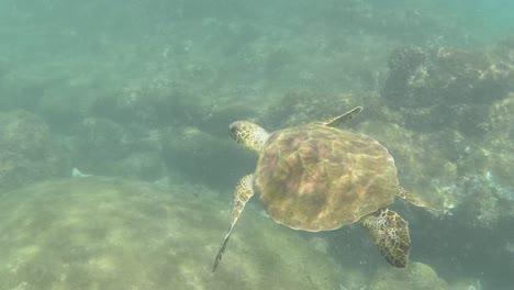 Snorkelling-in-Oahu-02