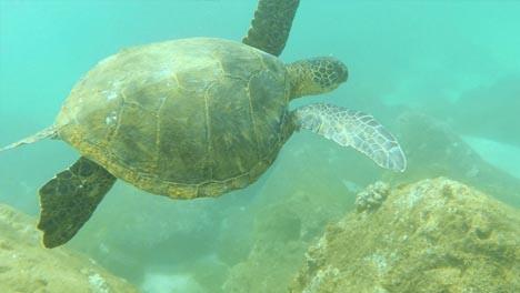 Snorkelling-in-Oahu-03