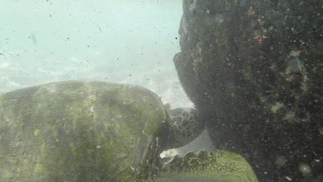 Snorkelling-in-Oahu-04