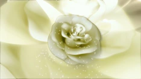 Flower-Motion-Background