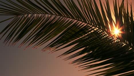 Sun-Flare-Through-Palm-Tree