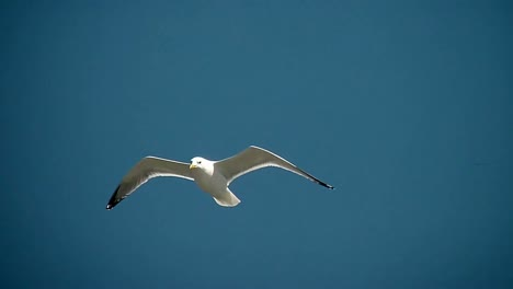 Seagull-in-the-Sky
