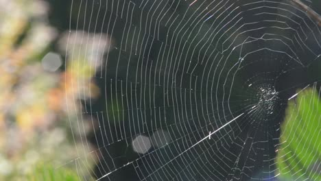 Spider-Web-Closeup