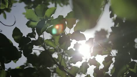 Sunlight-and-Leaves-Close-Up