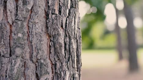 Tree-Trunk-With-a-Blurred-Background