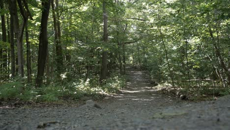 Wooded-Park-Pathway