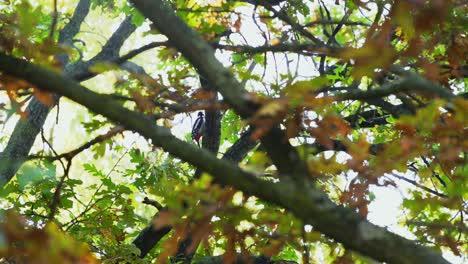Woodpecker-in-Tree
