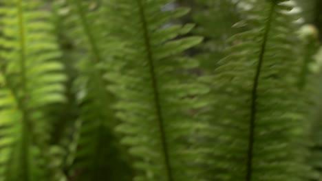 Water-Droplets-on-Fern-Leaf