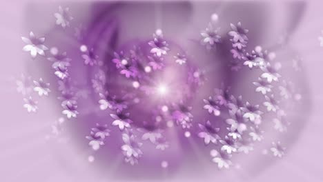 Purple-Flowers-Motion-Background
