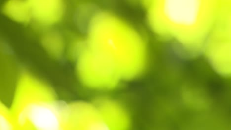 Green-Leaves-Bokeh