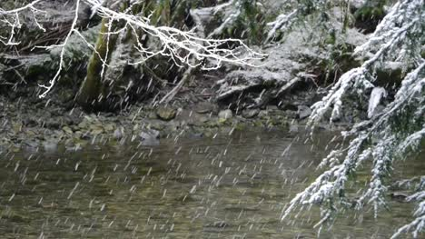 Falling-Snow-and-Branch