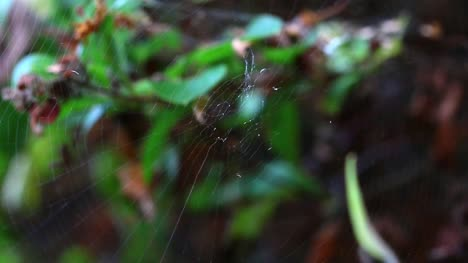 Spider-on-Web-Close-Up