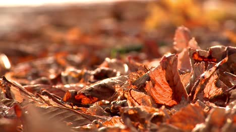 Autumn-Leaves-1-