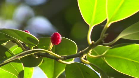 Red-Berry-on-Green-Leaves