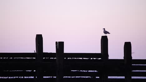 Seagull-at-Dusk