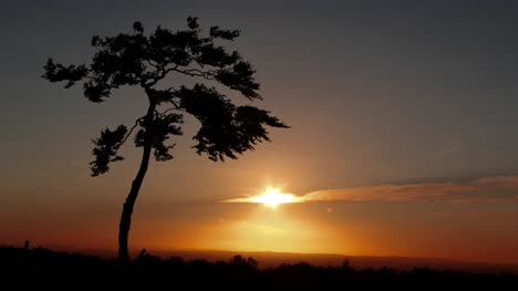 Lonely-Tree-at-sunset-CC-BY-NatureClip