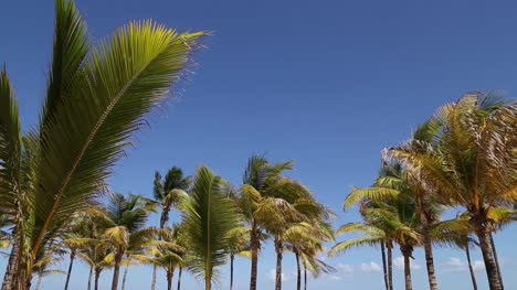 Palm-Trees-and-Blue-Sky
