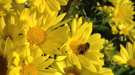 Bee-Pollinating-and-a-Curious-Ant