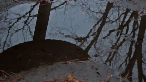 Bleak-Abandoned-Park-Tire-Swing-(Reflection)