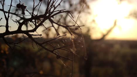 Spider-Web-on-a-Branch-at-Sunset
