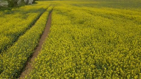 Fly-Over-Yellow-Field