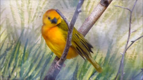 Weaver-Bird-Sitting-on-Branch