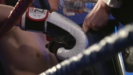 Boxer-Drinking-Water-Slow-Motion