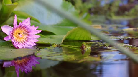 Flower-Reflection-in-Pond