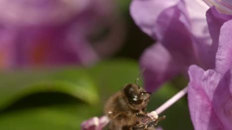 Bee-on-Flower-3
