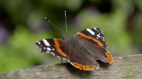 Resting-Butterfly-Close-Up-1