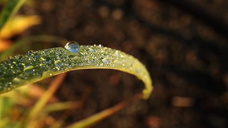 Morning-Dew-on-Grass-Blade