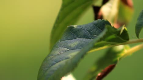 Close-Up-Green-Leaf