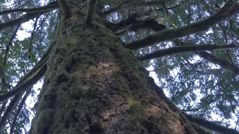Moss-on-the-Side-of-a-Tree