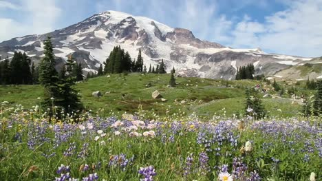 Wildflowers-on-Mt-Rainier