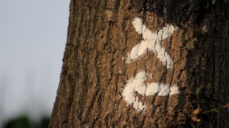 Trail-Marker-on-Tree
