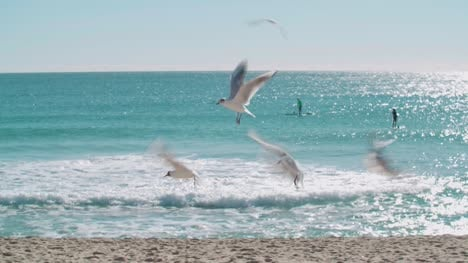 Seagulls-on-the-Beach